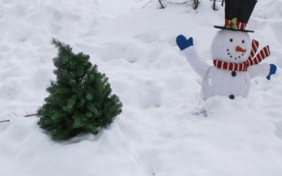 Vágott vagy cserepes fenyő? Avagy így ápold a karácsonyfát!